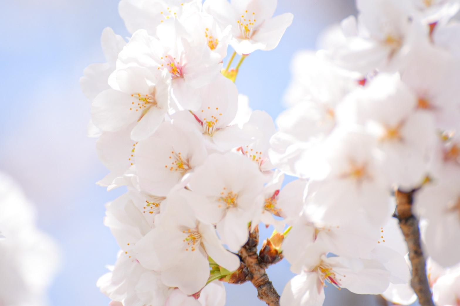 3月度皆勤賞~花粉に負けない!~